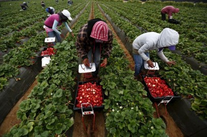 Mexican farmworkers