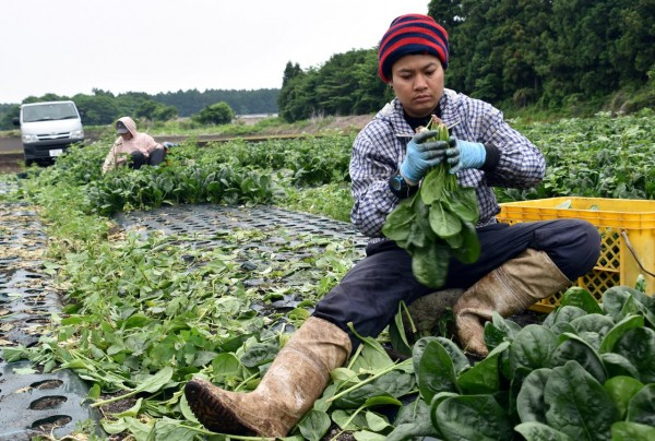 Latino and Hispanic farm workers
