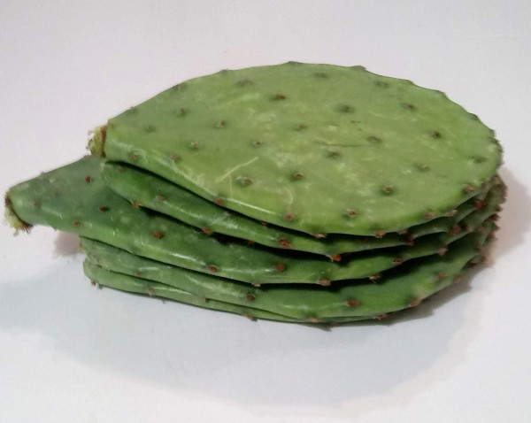Super Food Spineless Opuntia Prickly Pear Cactus