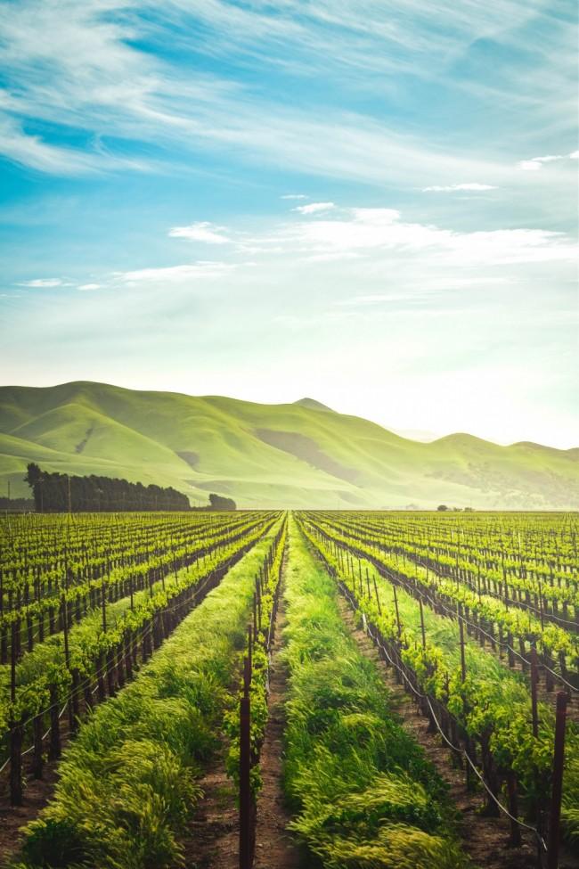 Agricultural Revolution Sparked by Social Media