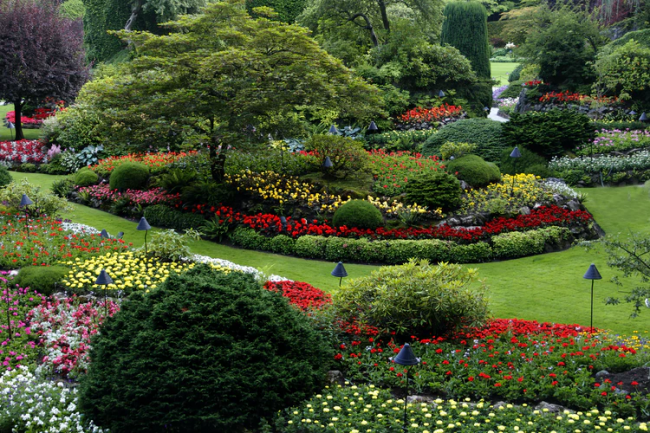 5 Essential Tips to Have the Best-Looking Lawn