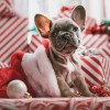 'Raise the Woof': A Very First Christmas Song for Dogs