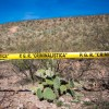 Gun Battle Between Rival Mexican Drug Cartels Left 8 People Dead