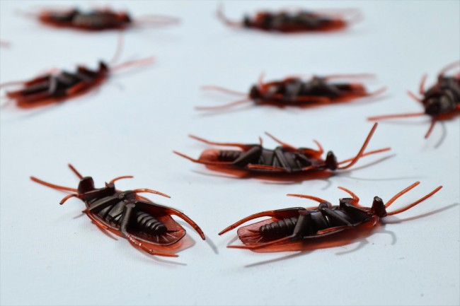 How Safe and Effective Are Ultrasonic Pest Repellers