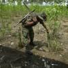 Coca Plant Eradication in Effect