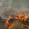 California to See Worsening Forest Fires for the Next Decade: Study