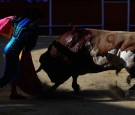 10 Hurt in Mexico as Angry Bull Runs Amok at Illegal Rodeo