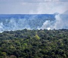 Indigenous Groups Push to Protect 80 Percent of Amazon From Deforestation