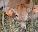 BELGIUM-EU-FARM-TRADE-LATAM-AGRICULTURE