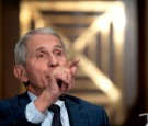 Dr. Anthony Fauci Being Called to Resign After Report Claims U.S. Funneled Funds to Wuhan Research Through National Institute of Health