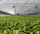 Tech Innovations in Farming for Sustainable Future