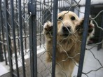 A dog that was seized due to concerns by