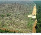 Brazil refused to sign an anti-deforestation pledge at Tuesday's UN summit in New York.