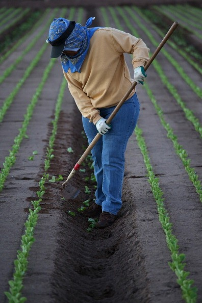 farm-workers-strike